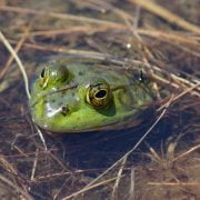 5 Ways to Get Rid of Frogs and Toads in Your Yard