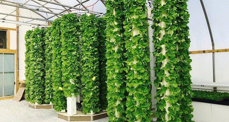 7 Reasons Why You Should Grow an Aeroponic Tower Garden