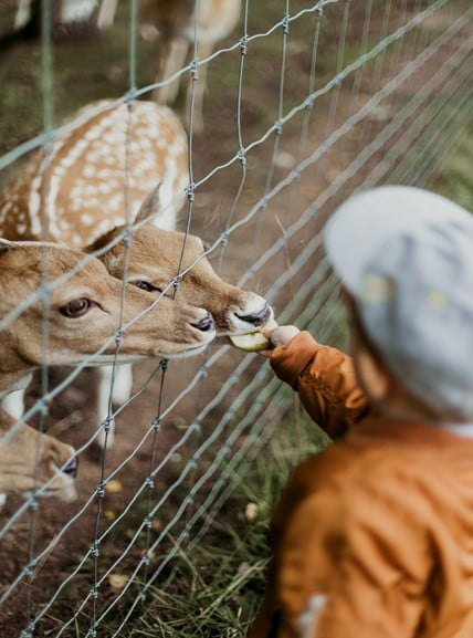 Advantages of Feeding and Keeping Deer