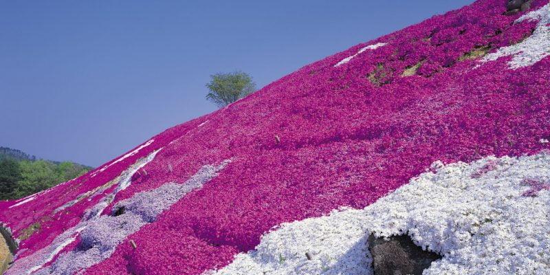 Best Plants for Steep Hillside