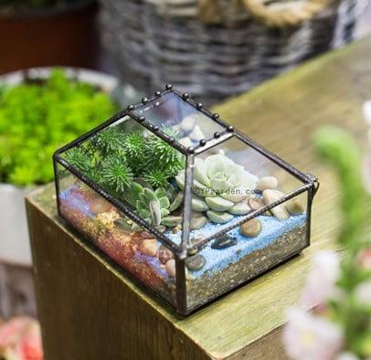 Box Garden Terrarium