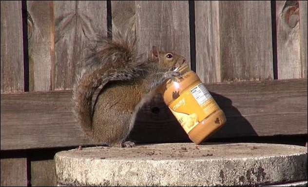 Can One Feed Normal Human Food to Squirrels