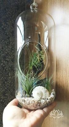 Capsule Glass Terrarium