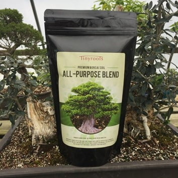 Caring your Apple Bonsai Tree