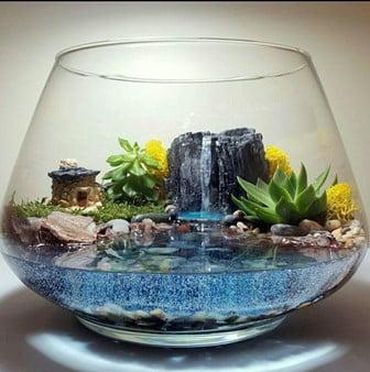 Coloured Water Terrarium