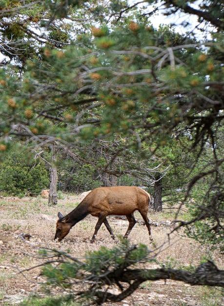 Day Diet of Deer