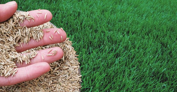 Does Grass Seed Expire and How to Check