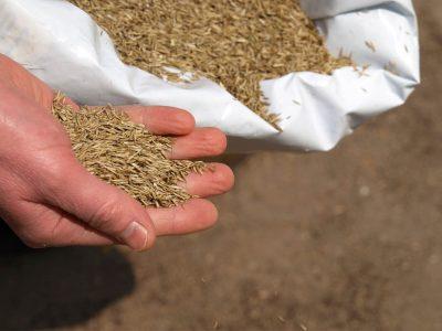 Hand sowing grass, closeup
