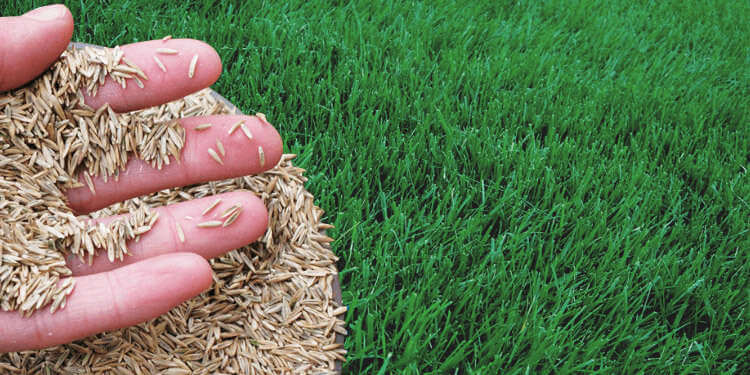 types of grass seed