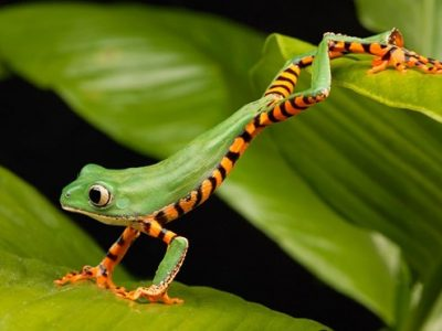 Effective Ways to Get Rid of Tree Frogs