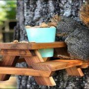Feeding Squirrels, Good or Bad