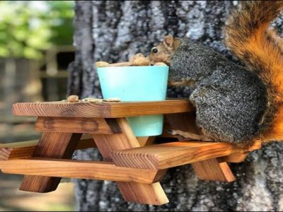Feeding Squirrels, Good or Bad