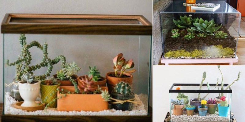 Fish Tank Planter and Terrarium Ideas