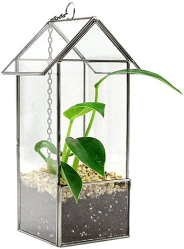 Glass Hut Hanging Terrarium