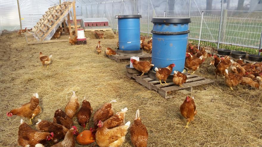 Greenhouse Nesting Box