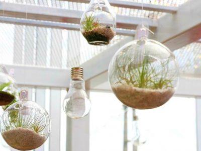 Hanging Terrarium Ideas