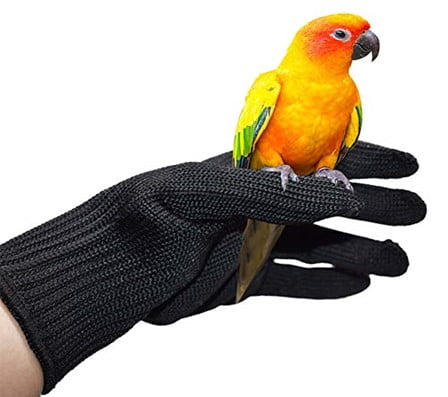 Hold Your Bird So That It Cannot Fly Off