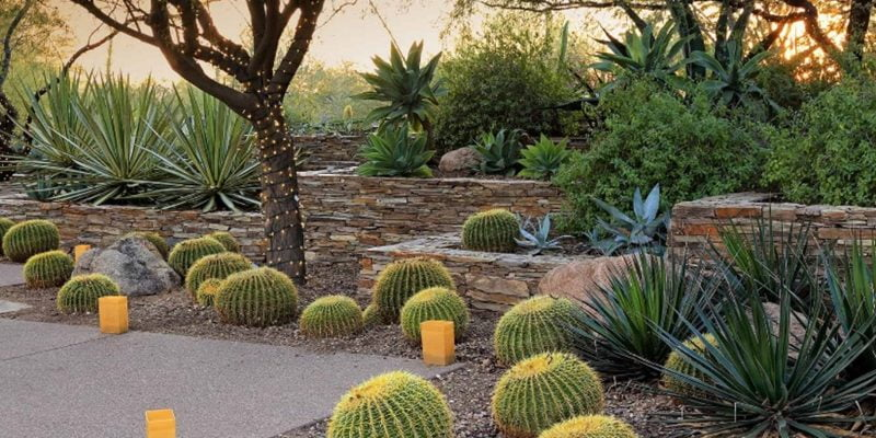 How Much Should You Water the Desert Landscape