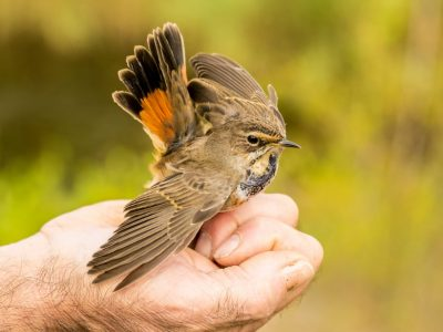 How to Catch A Bird Outside A Complete Guide