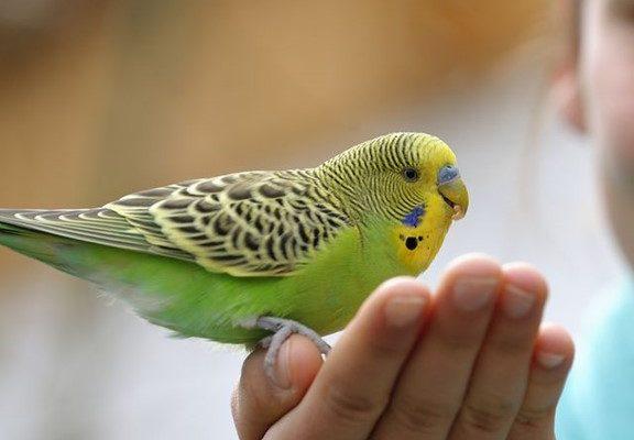 How to Catch a Pet Bird