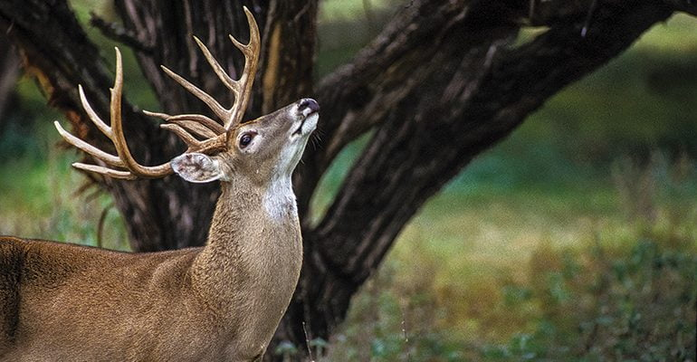 How to Get A Deer to Approach You and Not Be Afraid