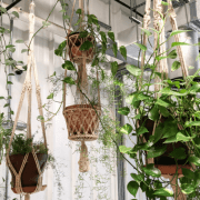 How to Hang A Plant from Ceilings Guide to Beautiful Green Spaces