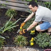 How to Prevent Weeds in Desert Landscape
