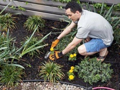 How to Prevent Weeds in Desert Landscape