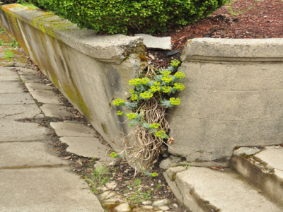 How to Repair A Retaining Wall [Common Reasons and Solutions