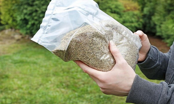 How to Store Grass Seed