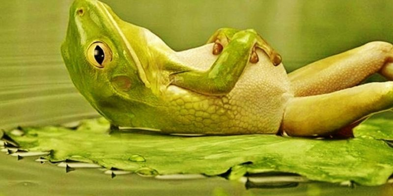 Is Chlorine Deadly for Frogs