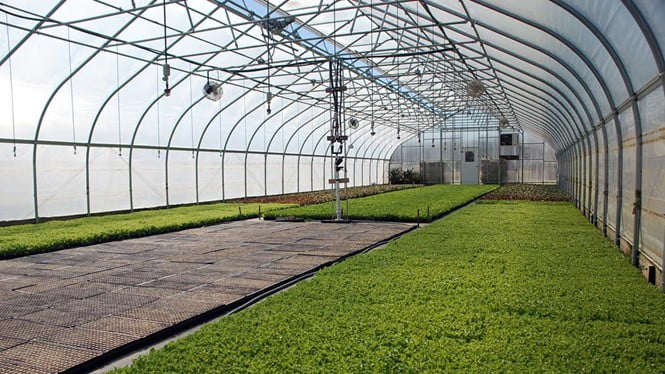 Let us Look at Some of The Tips for Growing Plants in A Cold Frame Greenhouse