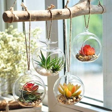 Plank Window Terrarium