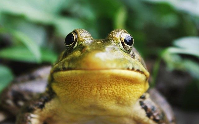 Proven Ways to Get Rid of Frogs Around the House