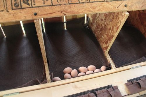 Rolled out Nesting Box
