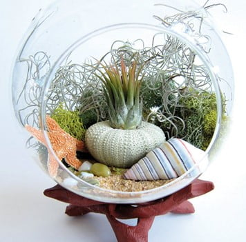 Succulent Sea Terrarium