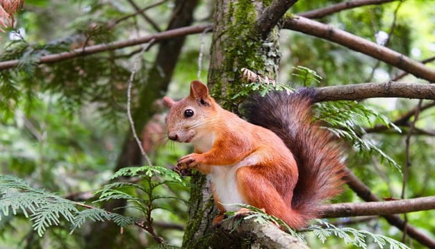 Things You Should Avoid Giving to Squirrels to Feed On