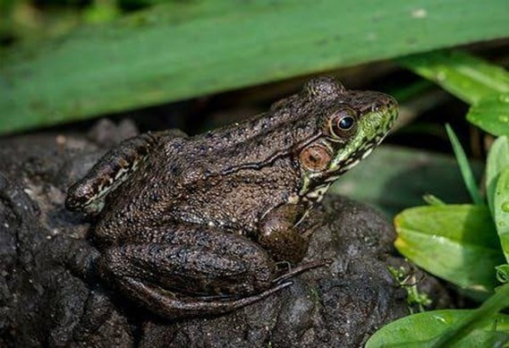 Ways to Attract Frogs in Your Garden