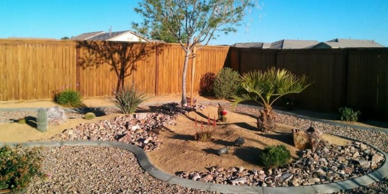 What Are the Best Trees for Desert Landscaping