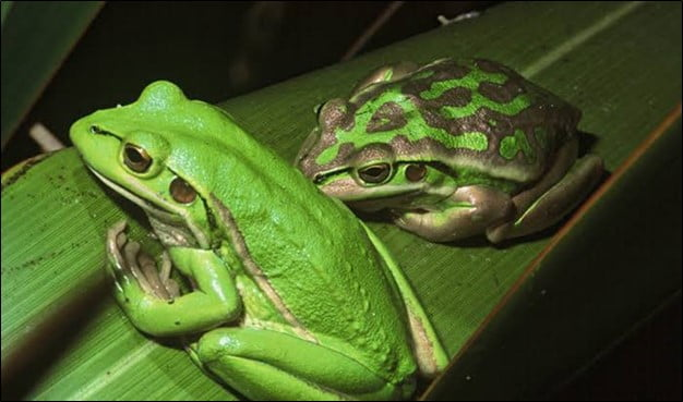 What Attracts the Frog to Invade Your Yard or House