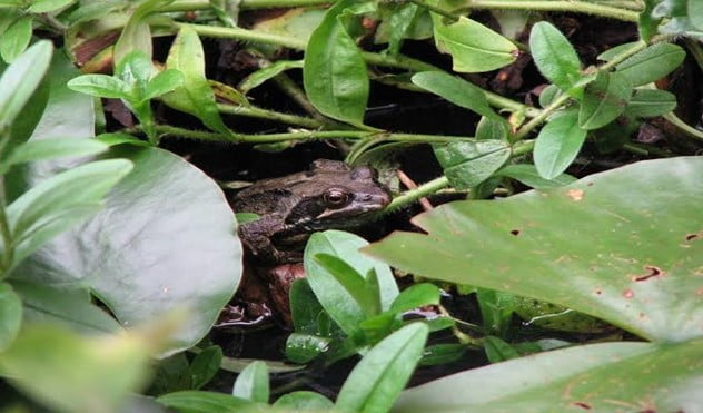 What Can Make Your Garden Be Full of Frogs