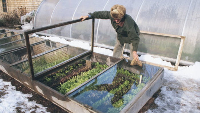 What Is A Cold Frame Greenhouse