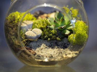 What Is A Terrarium A Complete In-Depth Insight