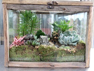 What Soil Suits a Succelents In Terrarium