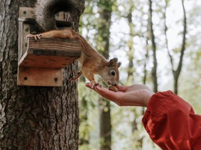 What is the Best Food to Feed Squirrels