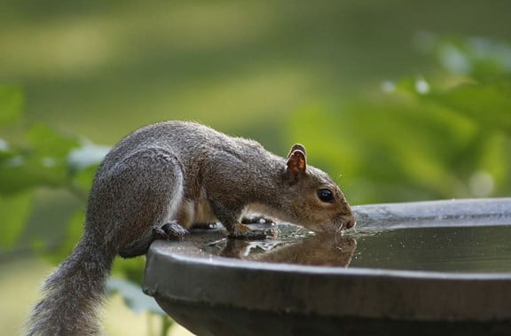 What to Feed A Wild Squirrels
