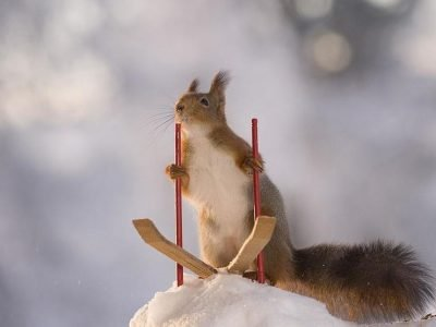 What to Feed Squirrels in Winter