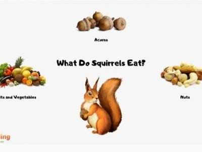 What to Feed Wild Squirrels