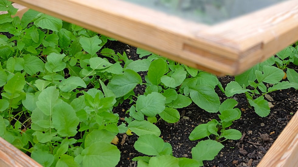 Why Use Cold Frame Greenhouses