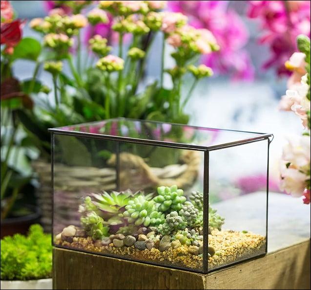 Your Favourite Terrarium Jars